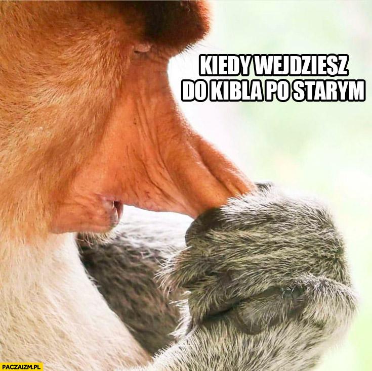 Kiedy wejdziesz do kibla po starym łapie się za nos typowy Polak nosacz małpa
