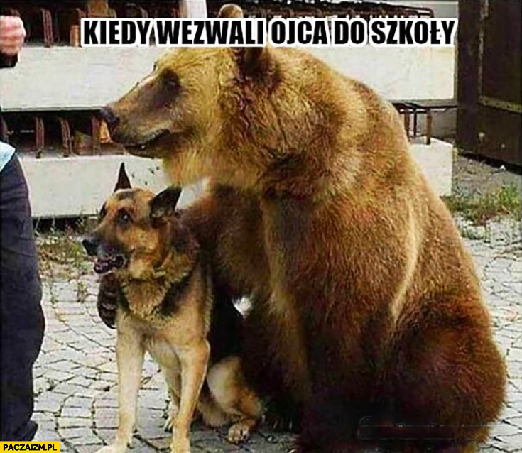 Kiedy wezwali ojca do szkoły niedźwiedź z psem