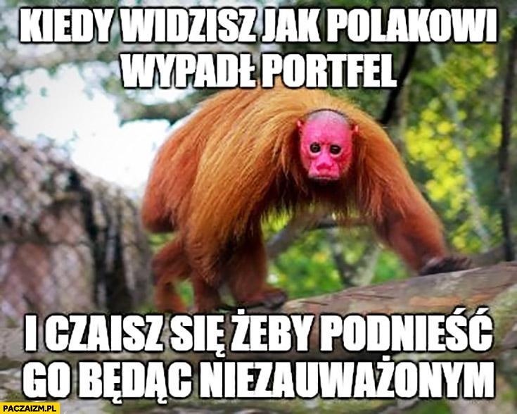 Kiedy widzisz jak Polakowi wypadł portfel i czaisz się żeby podnieść go będąc niezauważonym Ukrainiec małpa