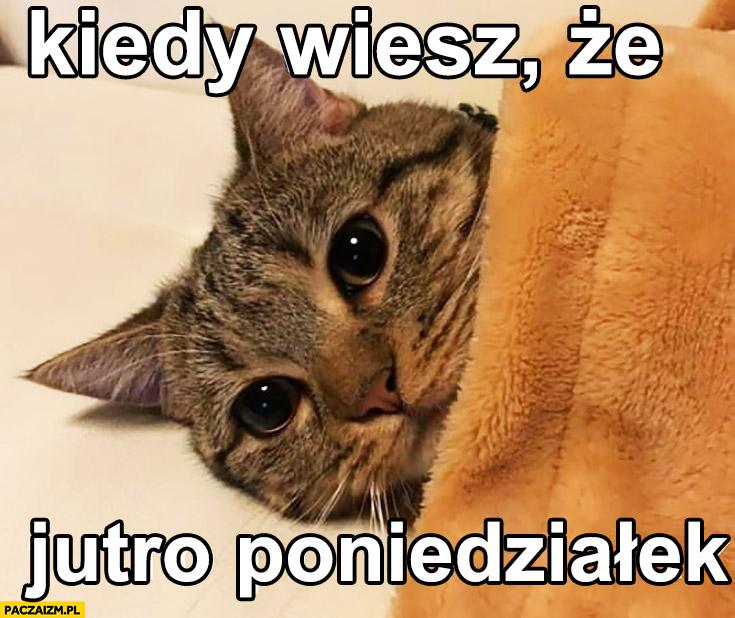 Kiedy wiesz, że jutro poniedziałek kot pod kocem
