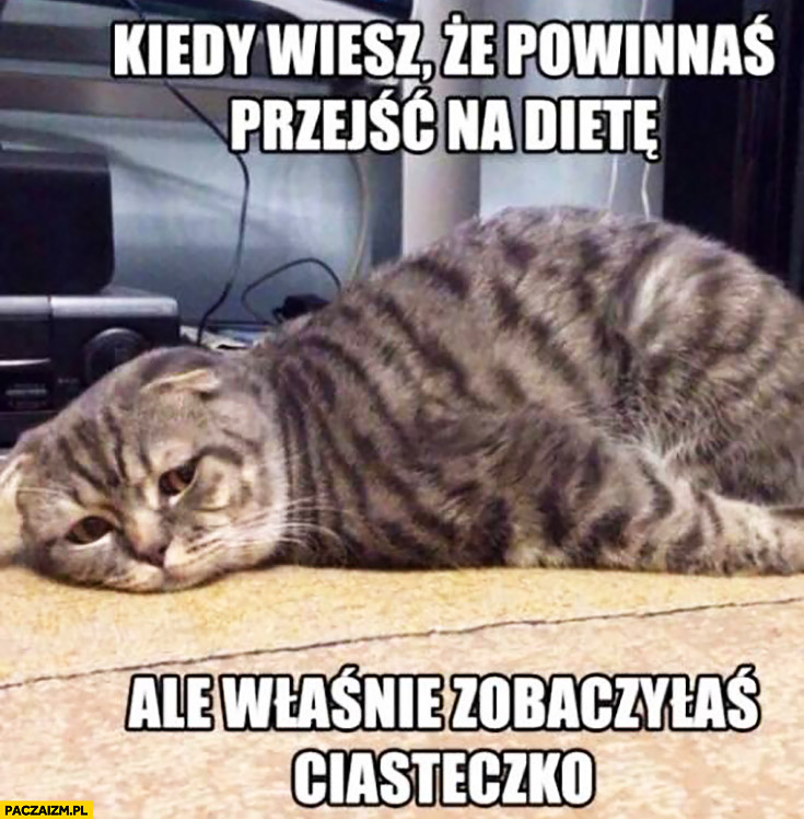 Kiedy wiesz, że powinnaś przejść na dietę, ale właśnie zobaczyłaś ciasteczko smutny kot