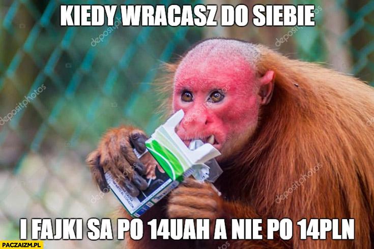 Kiedy wracasz do siebie i fajki są po 14 UAH a nie po 14 PLN typowy Polak nosacz małpa Ukrainiec