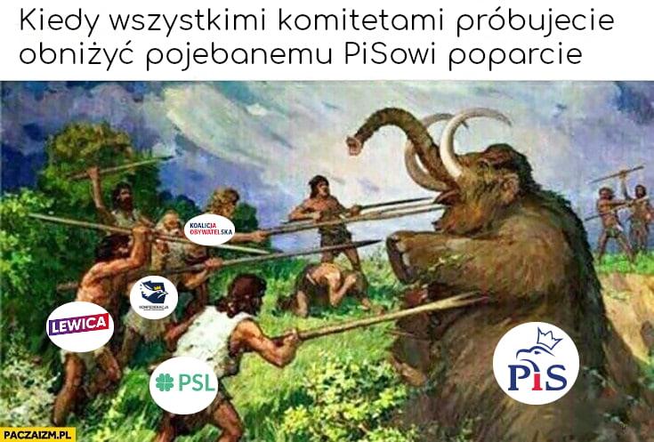 Kiedy wszystkimi komitetami próbujecie obniżyć pojechanemu PiSowi poparcie mamut