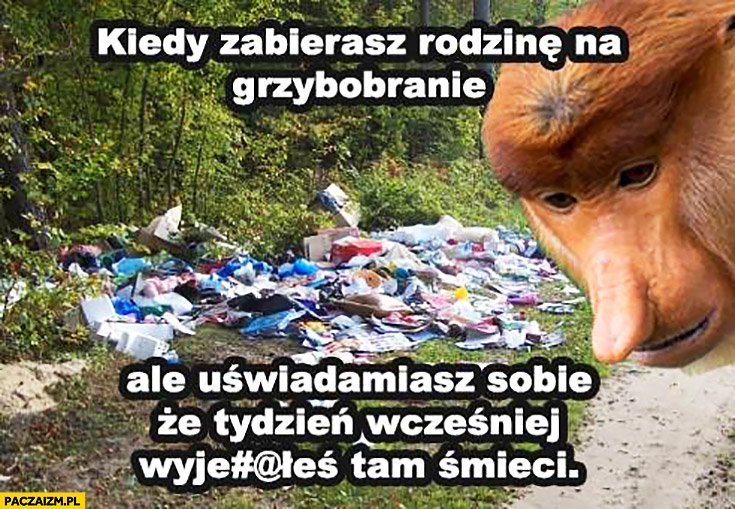 Kiedy zabierasz rodzinę na grzybobranie ale uświadamiasz sobie, że tydzień wcześniej wyrzuciłeś tam śmieci typowy Polak nosacz małpa