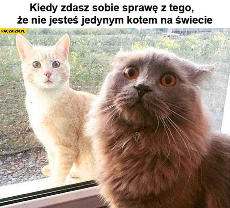 Kiedy zdajesz sobie sprawę z tego że nie jesteś jedynym kotem na świecie