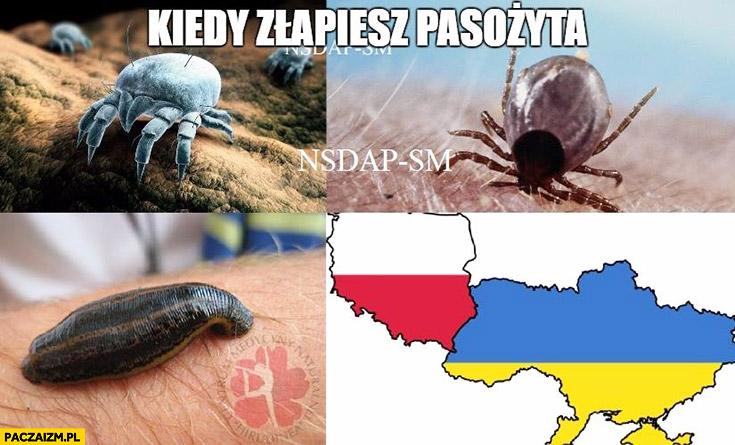 Kiedy złapiesz pasożyta Polska Ukraina kleszcz kleszcze