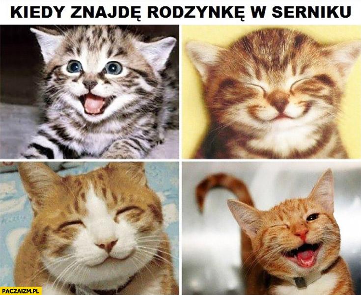 Kiedy znajdę rodzynkę w serniku szczęśliwe zadowolone uśmiechnięte kotki
