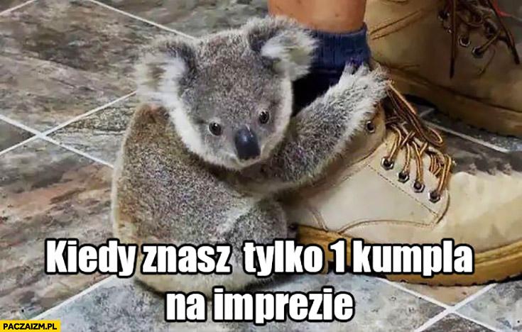 Kiedy znasz tylko jednego kumpla na imprezie koala trzyma się nogi