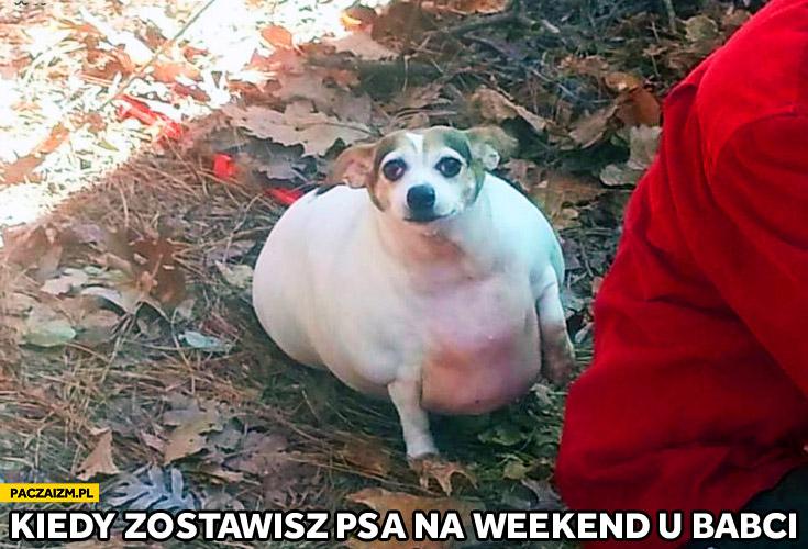 Kiedy zostawisz psa na weekend u babci