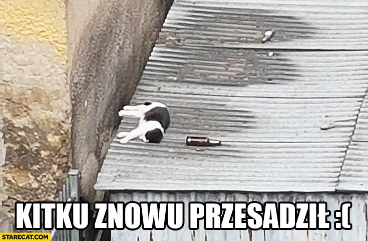 Kitku znowu przesadził pijany kot śpi na dachu