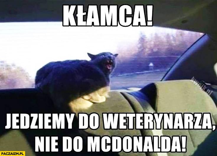 Kłamca! Jedziemy do weterynarza nie do McDonalda kot w samochodzie