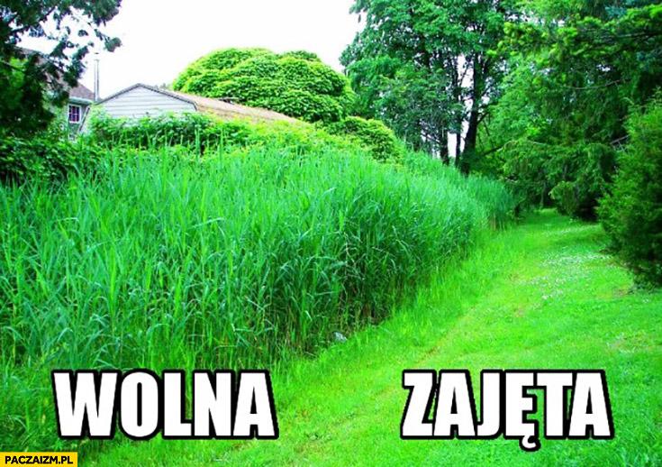 Kobieta przystrzyżony trawnik wolna zajęta porównanie
