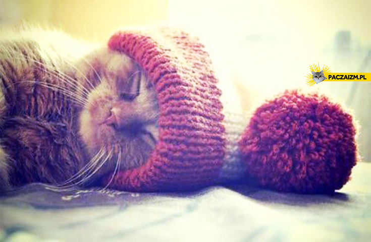 Kociak w czapce