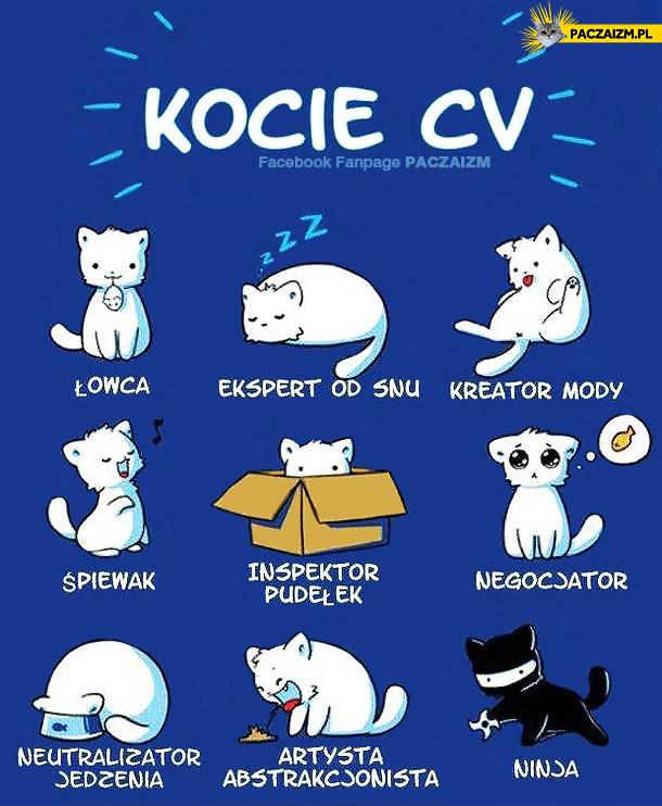 Kocie CV