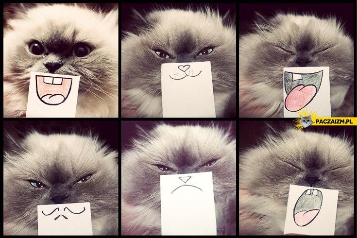 Kocie emotikony