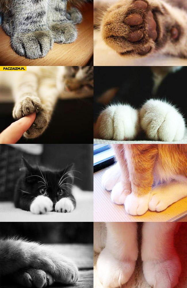 Kocie łapki