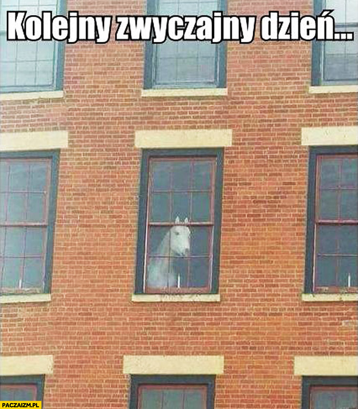 Kolejny zwyczajny dzień koń w oknie bloku biurowca