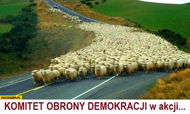 Komitet Obrony Demokracji w akcji owieczki