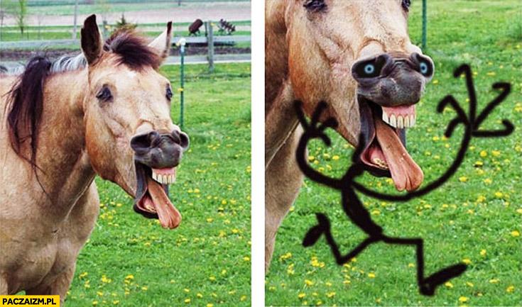 Koń dziwna mina ludek