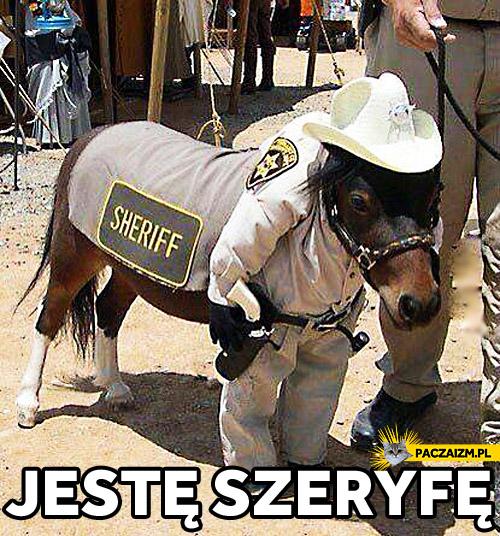 Koń jestę szeryfę
