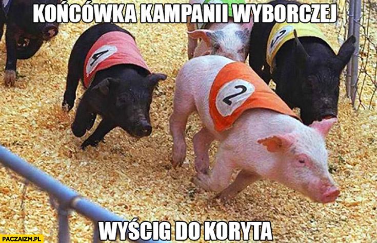 Końcówka kampanii wyborczej wyścig do koryta świnie