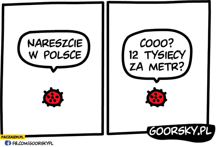 Koronawirus nareszcie w Polsce coo 12 tysięcy za metr? Goorsky