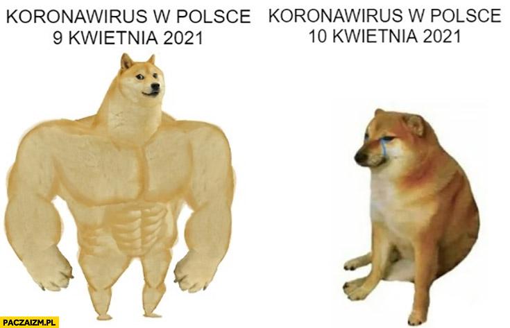 Koronawirus w Polsce 9 kwietnia 2021 vs 10 kwietnia pies pieseł doge