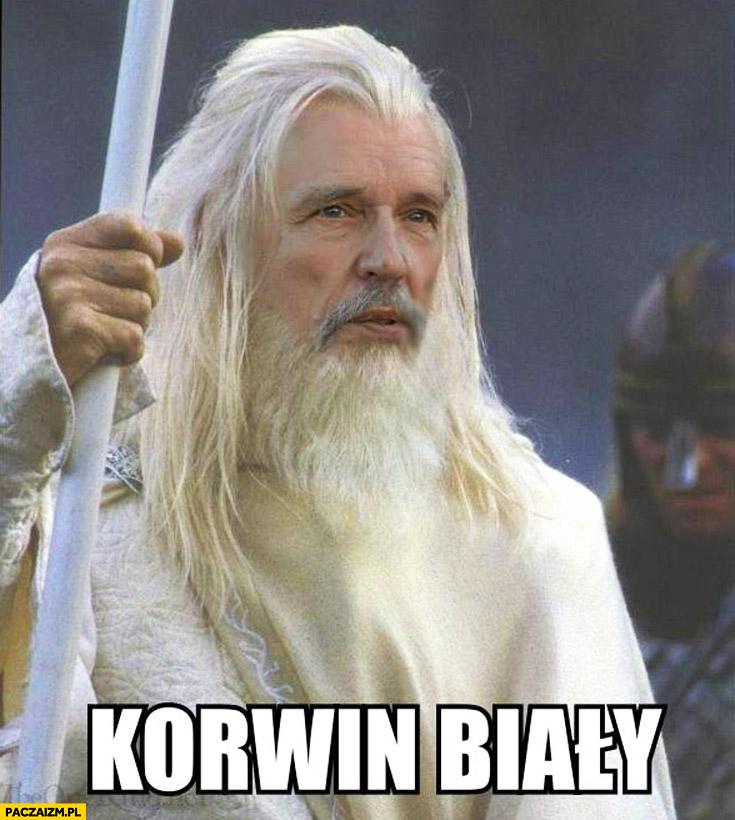 Korwin biały Gandalf