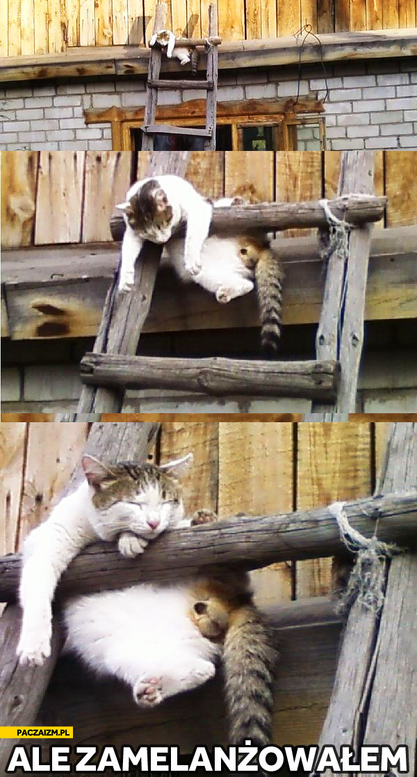 Kot ale zamelanżowałem