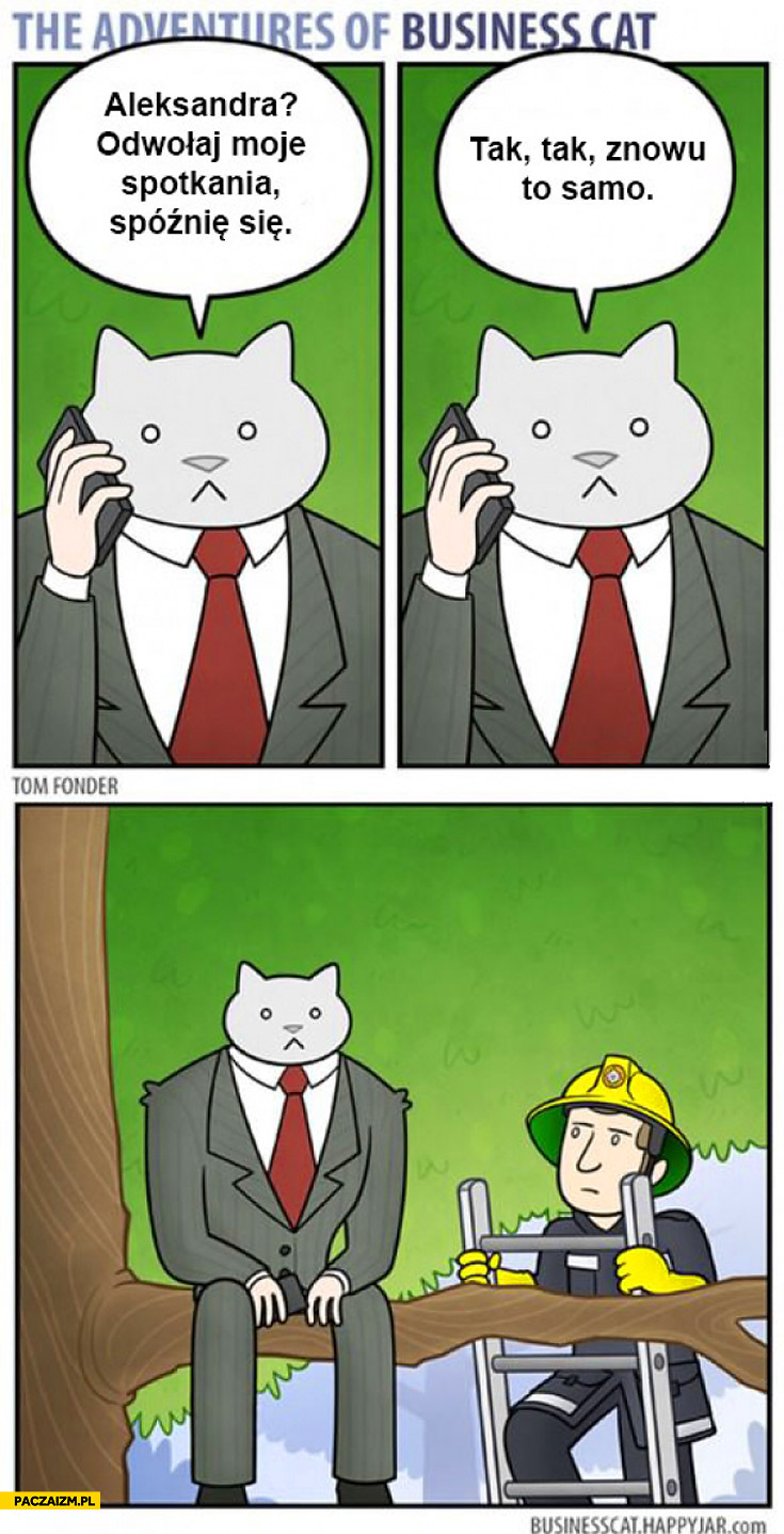 Kot biznesmen odwołaj spotkania tak znowu to samo utknął na drzewie