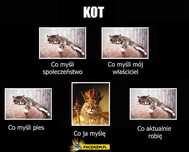 Kot – co myśli społeczeństwo i inni