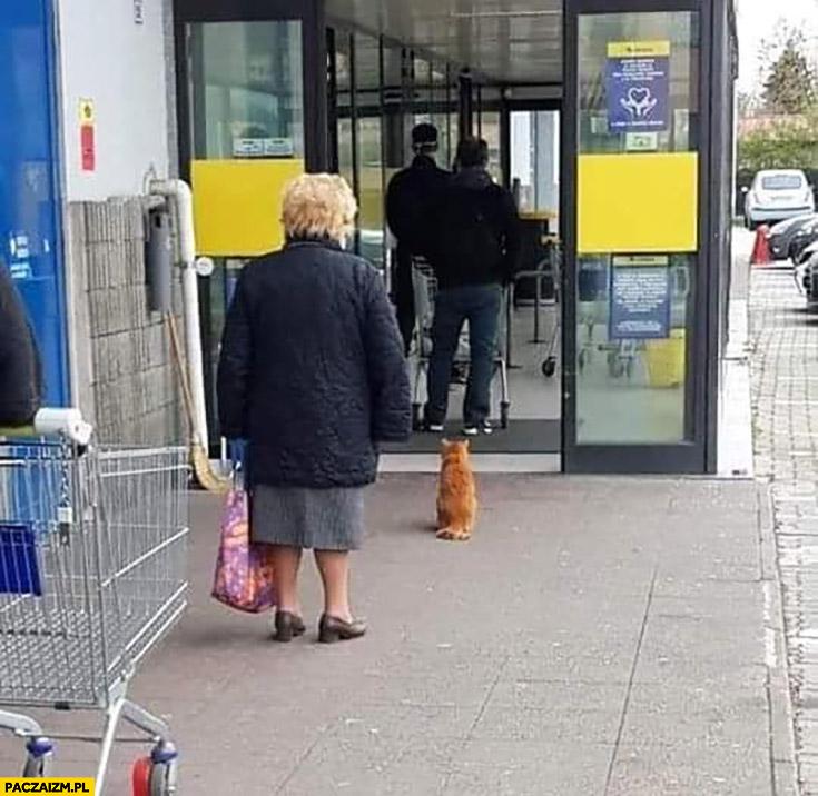 Kot czeka w kolejce na zakupy zachowuje odstęp koronawirus