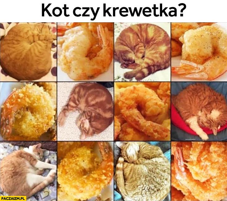 Kot czy krewetka? zagadka