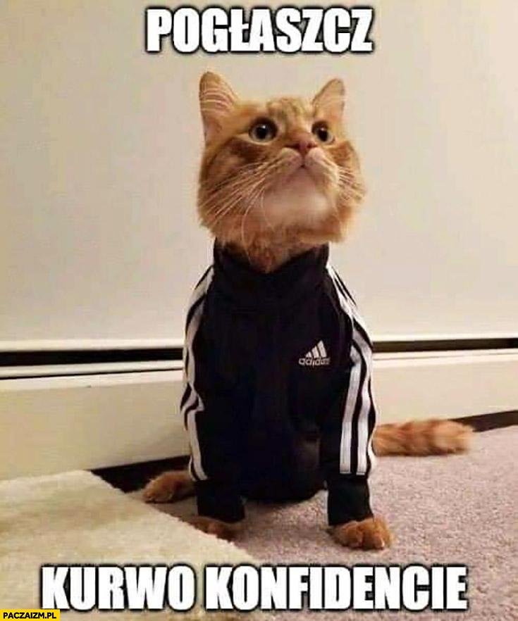 Kot dresiarz pogłaszcz kurna konfidencie