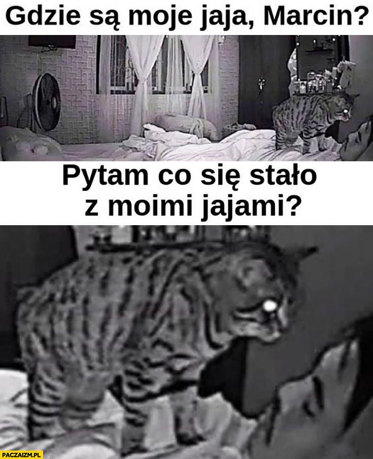 Kot gdzie są moje jaja Marcin, pytam co się stało z moimi jajami?