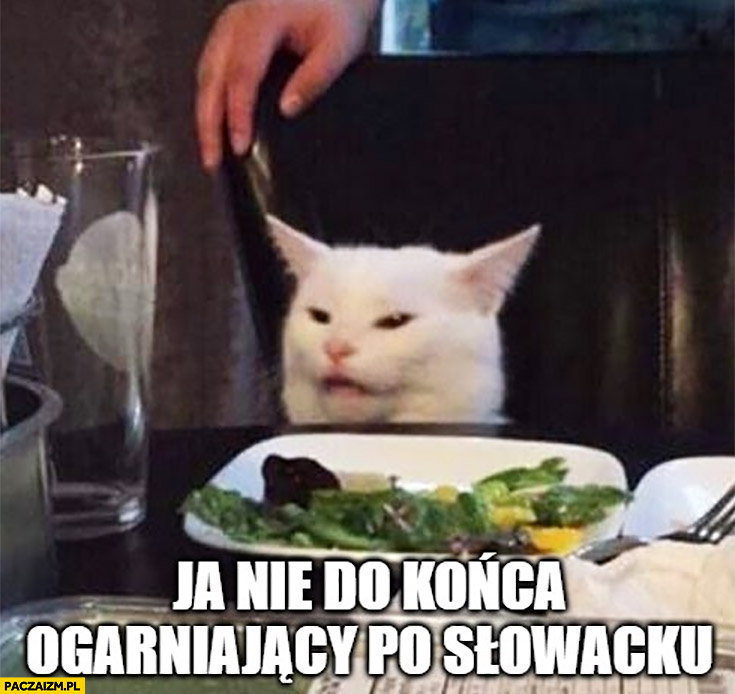 Kot ja nie do końca ogarniający po słowacku