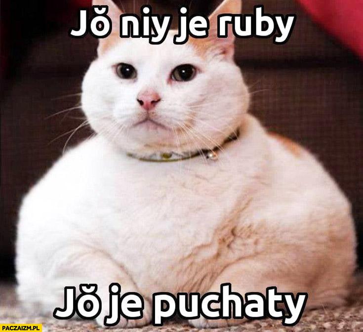 Kot ja nie jestem gruby, jestem puchaty