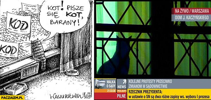 Kot Jarosława Kaczyńskiego patrzy z okna pisze się KOT nie KOD barany