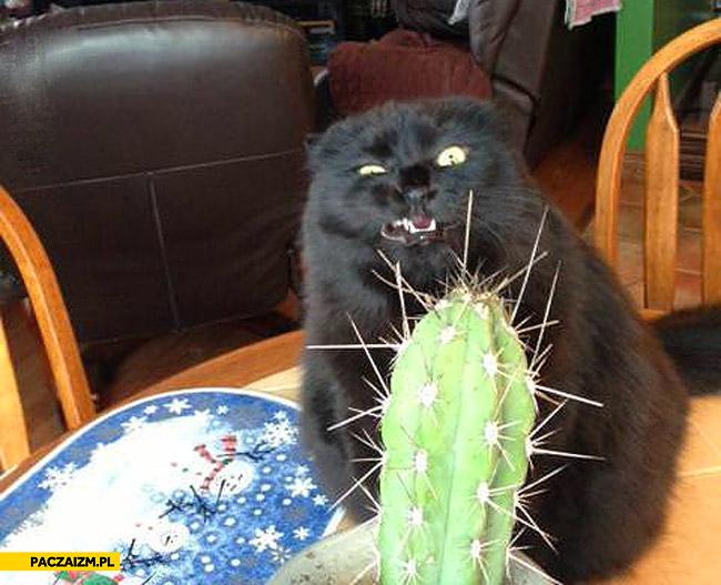Kot kaktus