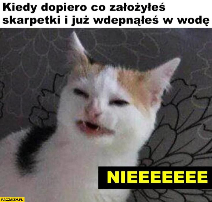 Kot kiedy dopiero co założyłeś skarpetki i wdepnąłeś w wodę niee