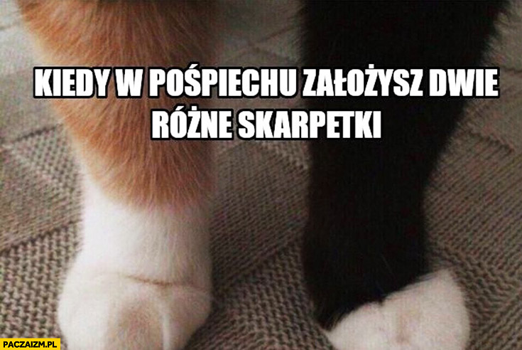 Kot kiedy w pośpiechu założysz dwie różne skarpetki