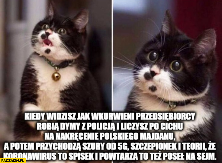 Kot kiedy widzisz jak przedsiębiorcy robią strajk i liczysz na polski Majdan ale przychodzą szury od 5G i szczepionek