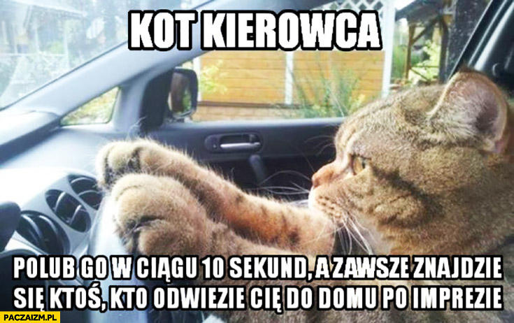 Kot kierowca polub go w ciągu 10 sekund a zawsze znajdzie się ktoś kto odwiezie Cię do domu po imprezie