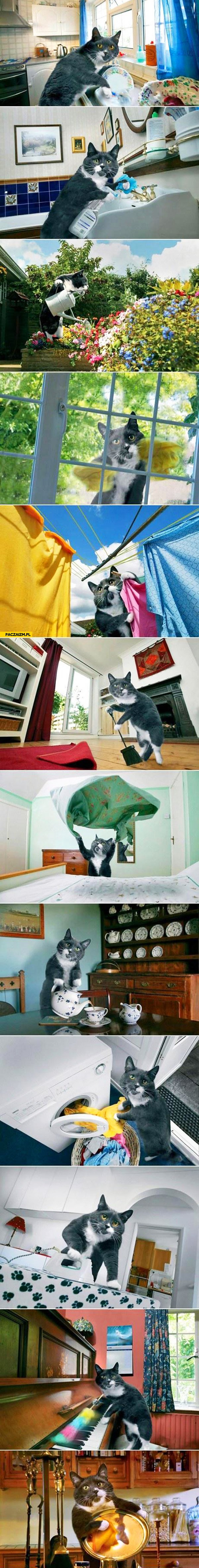 Kot który sprząta