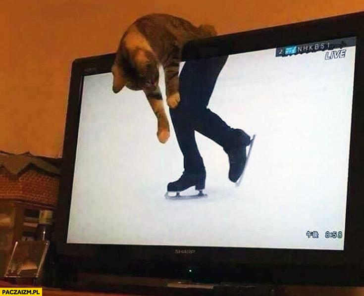Kot łyżwiarz wisi na telewizorze