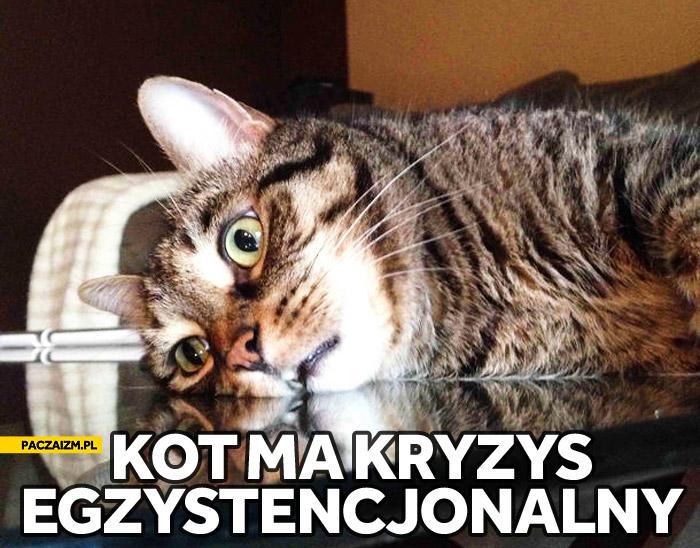 Kot ma kryzys egzystencjonalny
