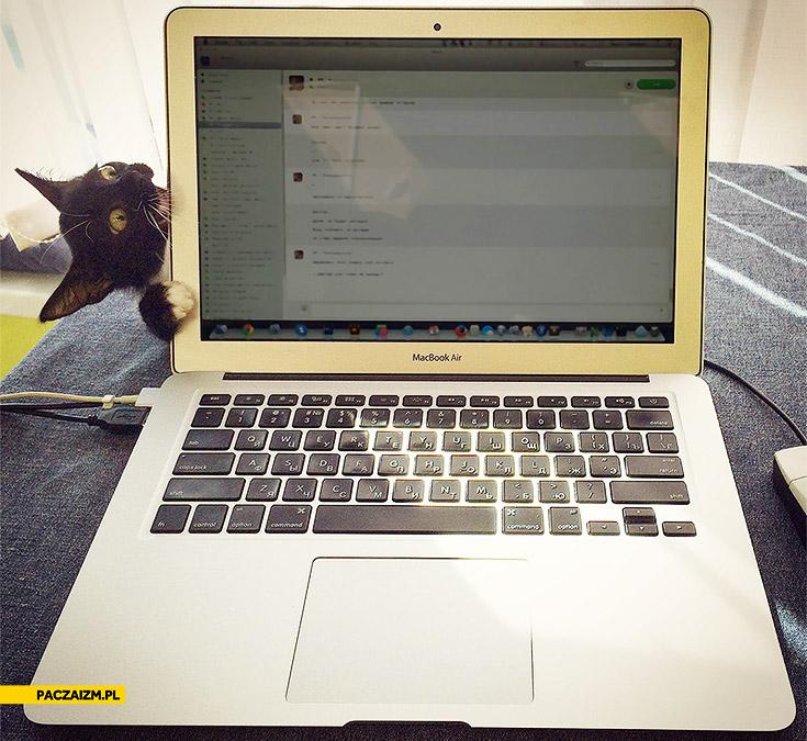 Kot MacBook