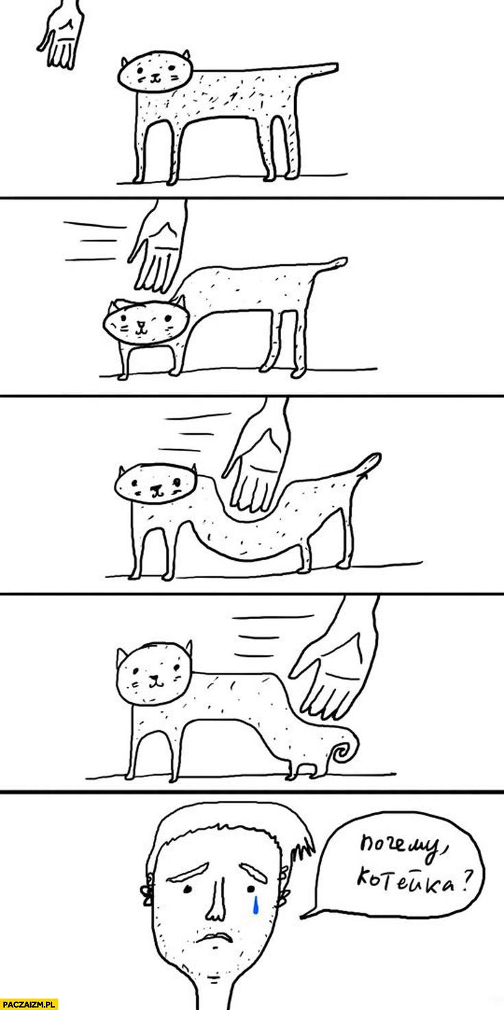 Kot nie daje się pogłaskać