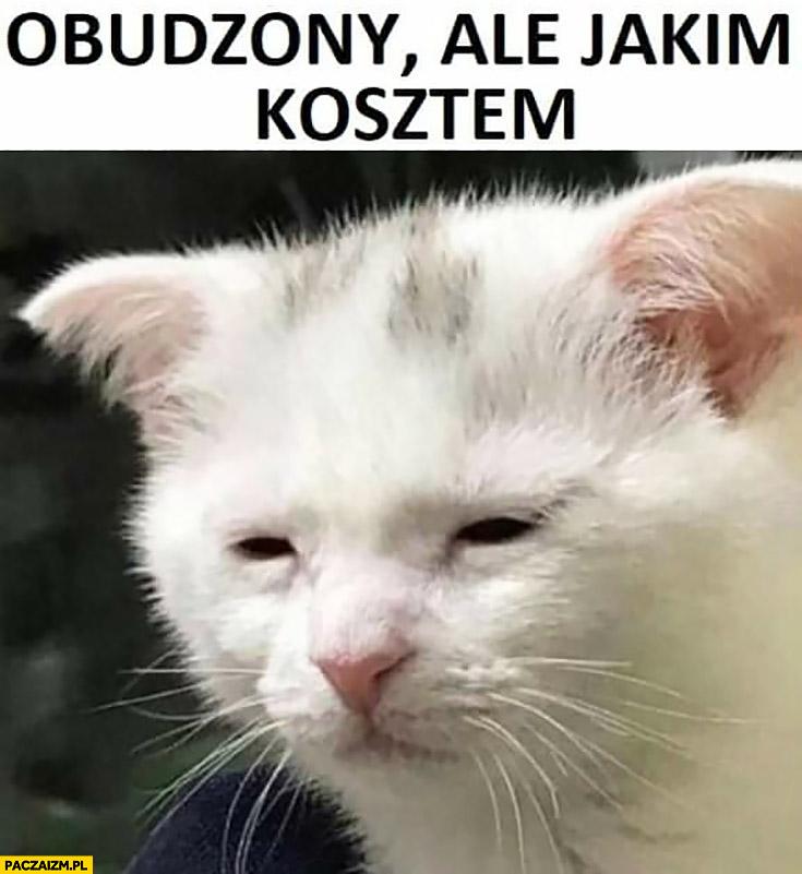 Kot obudzony ale jakim kosztem