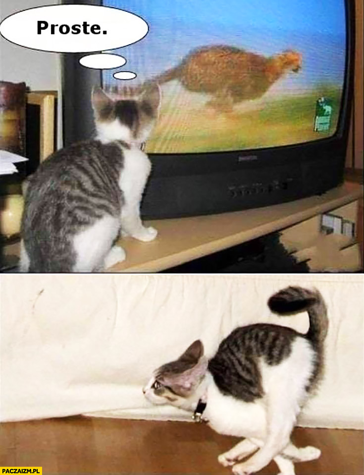Kot ogląda naśladuje biegnącego geparda proste